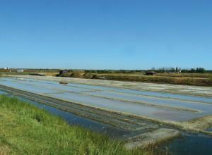 Marais salant sur l'île de Ré