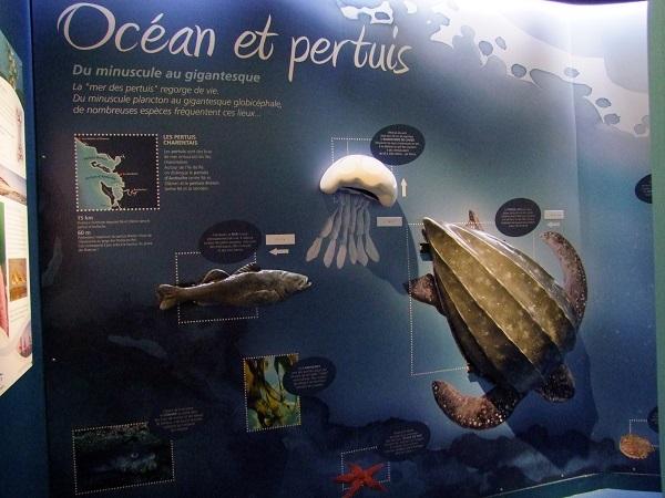 Océan et pertuis : tortues, méduses