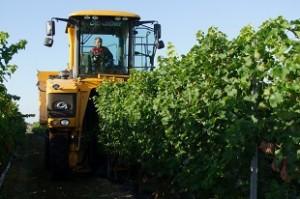 La machine à vendanger ramasse le fruit de la vigne