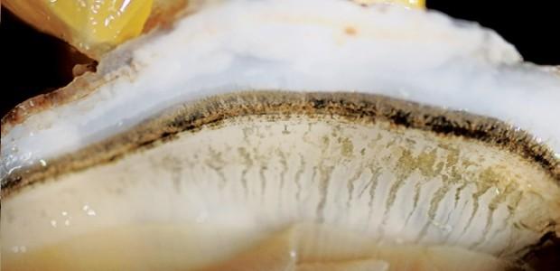 Le Tout cru, bar à dégustation d'huîtres à St Martin de Ré
