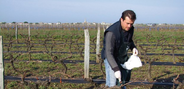Anthony Guilbeau dans sa vigne