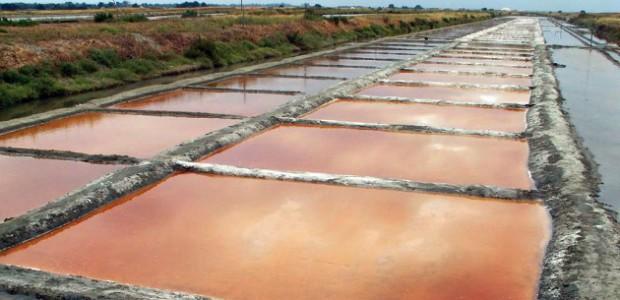 Marais salant île de Ré. Une production de sel 2014 très mauvaise