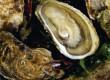 Les dégustations d'huîtres à l'honneur