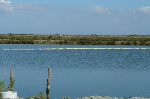 Des huîtres élevées en marais à Ars (île de Ré)