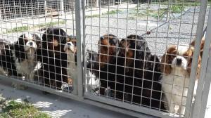 Chiens a adopter au refuge animalier APAr de Saint-Martin, sur l'île de Ré