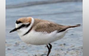Eurobirdwatch : Découvrez la magie des oiseaux migrateurs