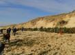 Un sapin pour ma dune…