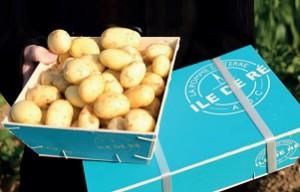 Pommes de terre : vers de nouveaux agriculteurs sur Ré