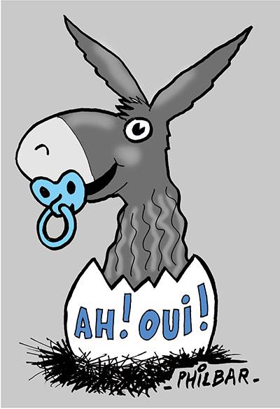 Un petit âne baudet du Poitou est né sur l'île de Ré