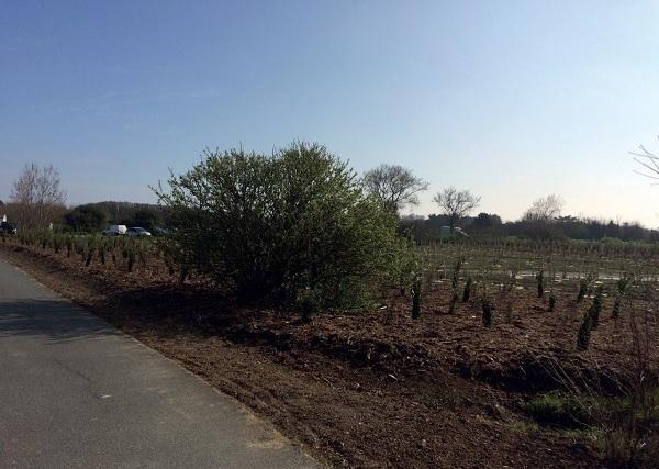Aménagement paysagé et plantations sur le site du phar des baleines à St Clément
