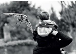 Rapace; © Damien Vouzeleaud - CdC
