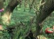 L'Ile de Ré cache une forêt