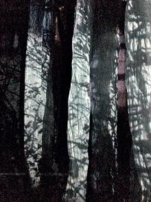 La forêt à l'honneur dans le cadre du mois de l'environnement