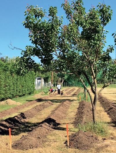 L'association TerreMerCulture de La Couarde pratique la permaculture