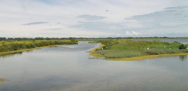 marais : Fête de la nature mai 2017 sur l'île de Ré