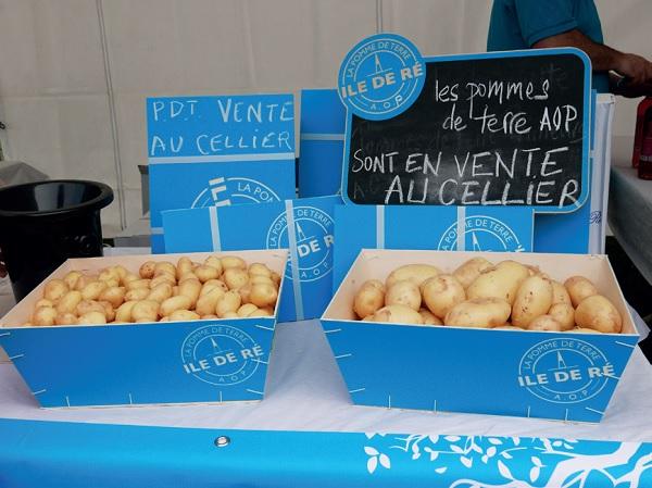 Le lancement de la campagne de récolte de la pomme de terre AOP est à l'origine des Régalades au Bois-Plage, île de Ré