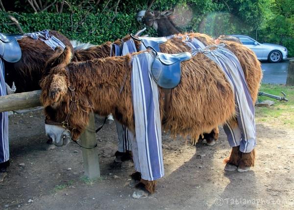 Activités enfants sur l'île de Ré : les ânes au parc de la Barbette