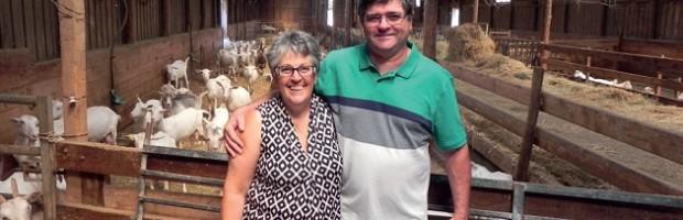 La chèvrerie de Loix va changer de propriétaires