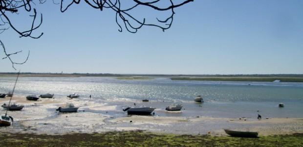 Fier d'Ars. Rapport du CESER Nouvelle-Aquitaine sur la qualité des eaux littorales