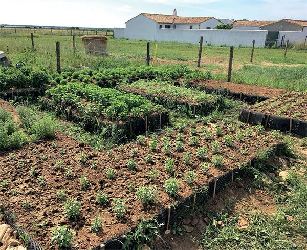 plantes du potager de Gilles Perrin chez Estancia Bel Air à Loix - Ile de Ré
