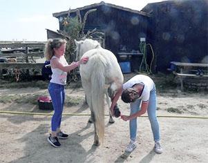 Les enfants sont accueillis au centre équestre « Les chevaux de Loix ».