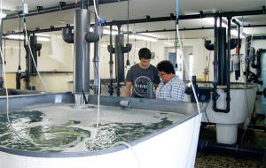 Étalonnage de l'oxymètre dans la salle de pisciculture