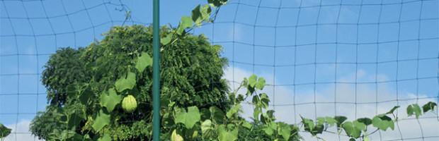 Les Jardiniers de l'île de Ré proposent aux amateurs de partager leur passion dans la convivialité