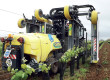 L'âge de raison de la viticulture