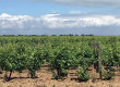 Domaine Pelletier, l'Autre vigneron de Ré