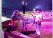« L'Île aux Chevaux », un magnifique spectacle mêlant arts équestres et arts du cirque