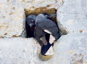 Couple dans son trou