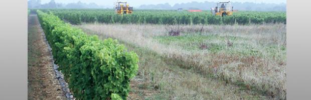 Vendanges 2018 : ciel bleu sur le vignoble rétais