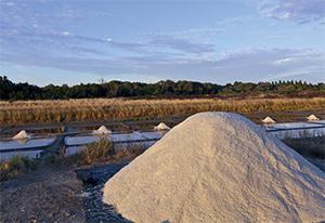 La récolte du sel dans le marais