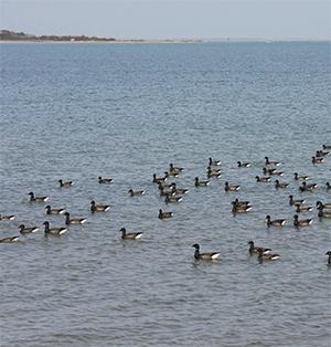 Groupe se reposant sur nos côtes