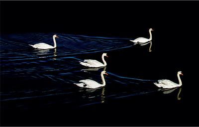 Groupe nageant en eau noire