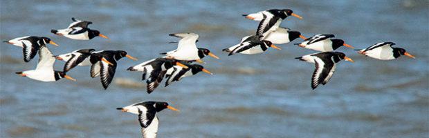 Observation des oiseaux migrateurs en hiver