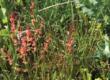 Comment se porte la biodiversité rétaise au regard de l'agriculture insulaire ?