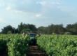 Uniré met en avant ses bonnes pratiques agricoles