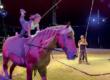 L'école de cirque équestre de Loix : une utopie qui prend vie