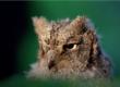 Lancement d'un service de collecte d'animaux sauvages en détresse
