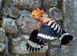 Nature dans nos villages : Chroniques vidéos à l'Ancre Maritaise