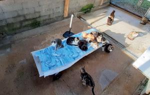 Protection animale sur l'Île de Ré : une évolution indispensable
