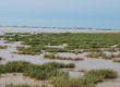 «Protéger les zones humides, c'est nous protéger nous»