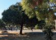Le Bois-Plage : animer la vie du village