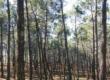 Une gestion durable de la forêt domaniale