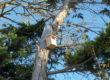 Des refuges LPO pour préserver la biodiversité