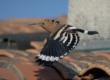 Accueillir des oiseaux dans son jardin