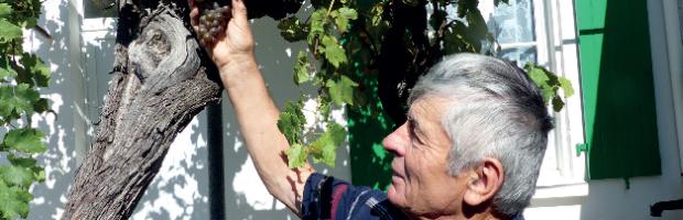 « Ré, terre de vignes et de vignerons »