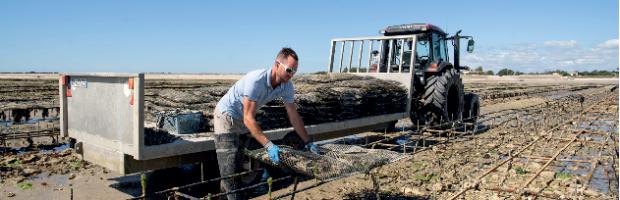 Huîtres et maRé : la passion d'un métier