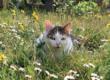 Une association pour les chats couardais